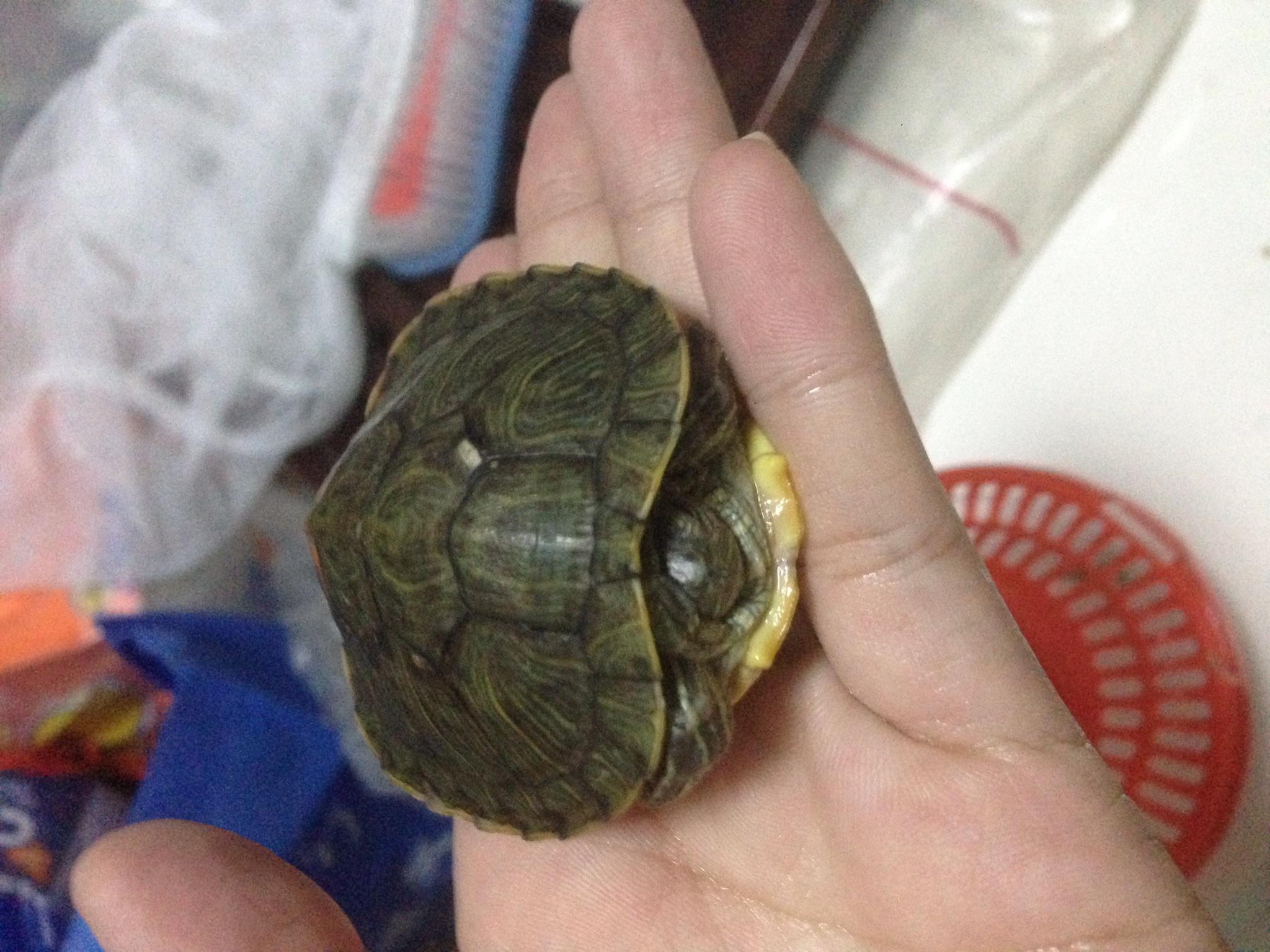怀孕初期养小动物